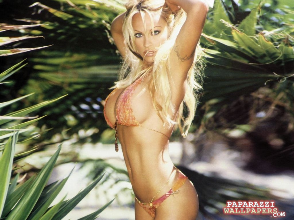 pamela anderson wallpapers 051