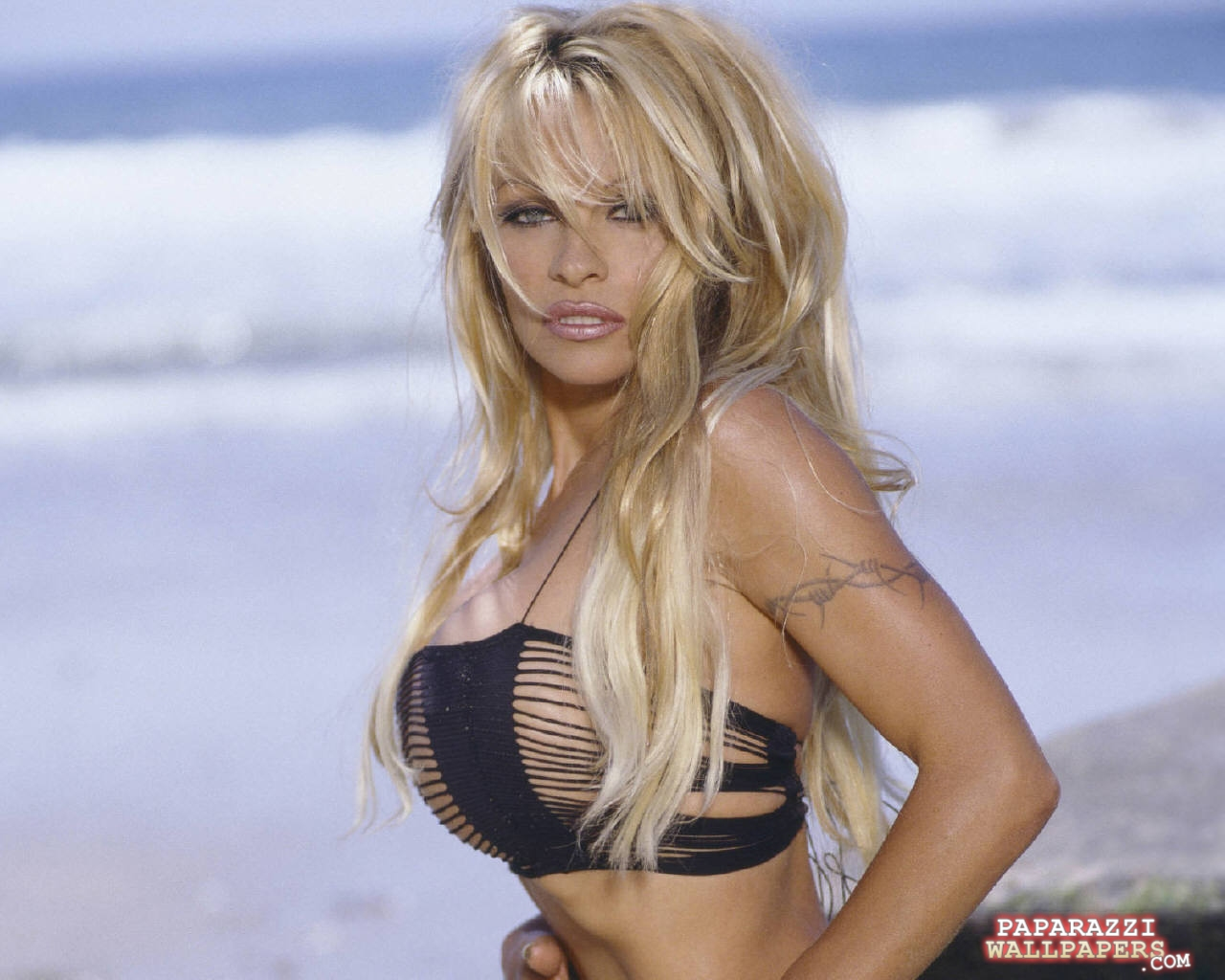 pamela anderson wallpapers 103