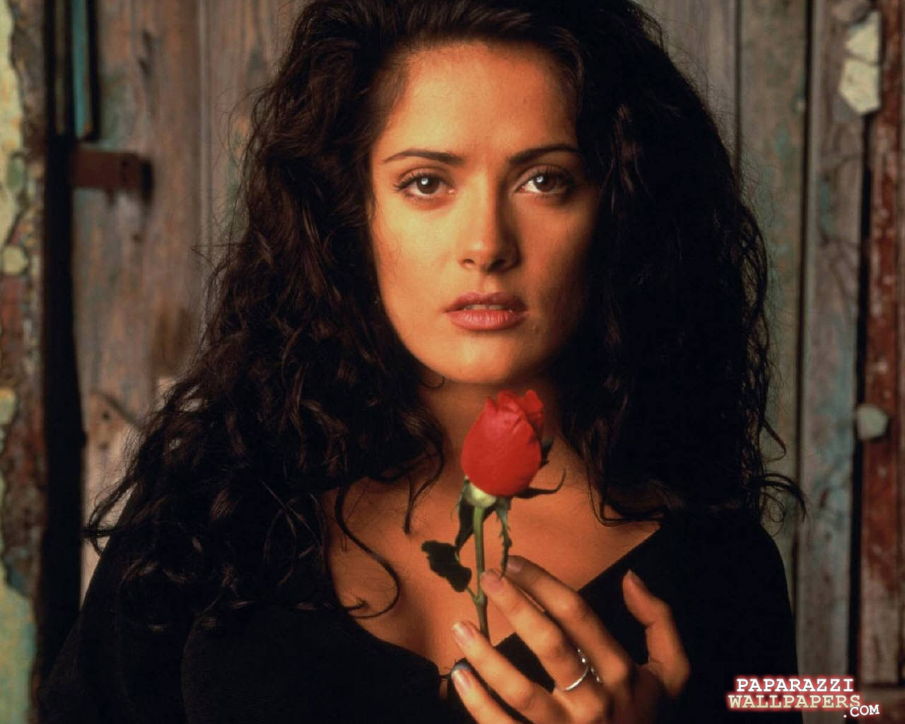 salma hayek wallpapers 051